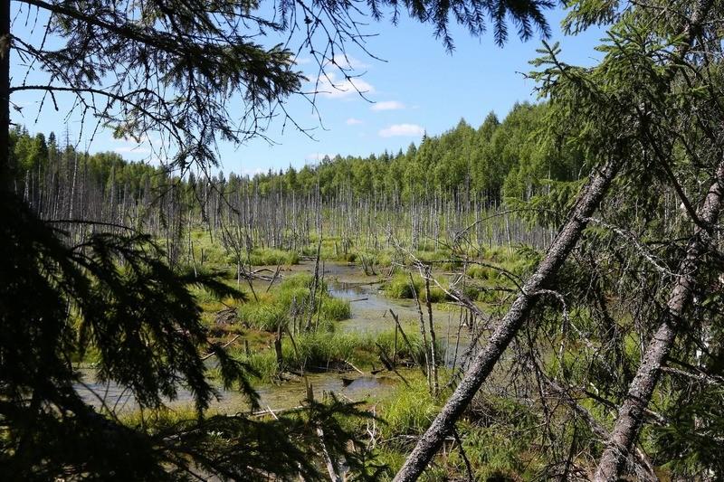 Заповедник Кологривский лес