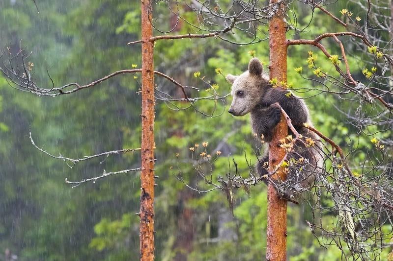 Национальный парк «Красноярские Столбы»